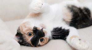 Nomi per gatti, quale scegliere